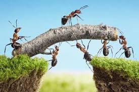 uwprojecten-mieren-brug